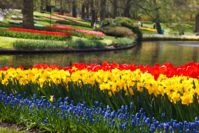 Keukenhof Tulips and Delft Tour from Brussels Full day